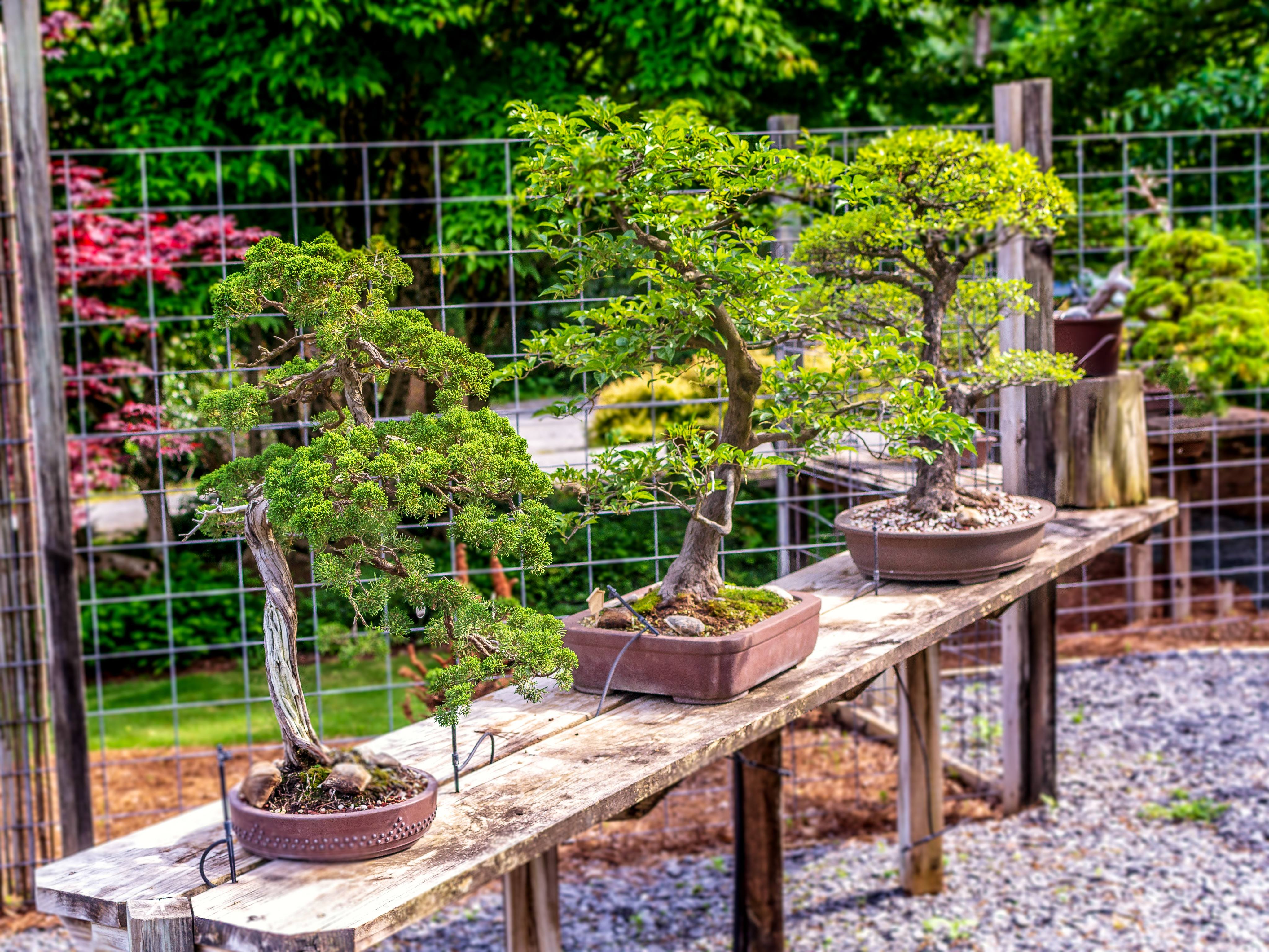 Bonsai-Display-1