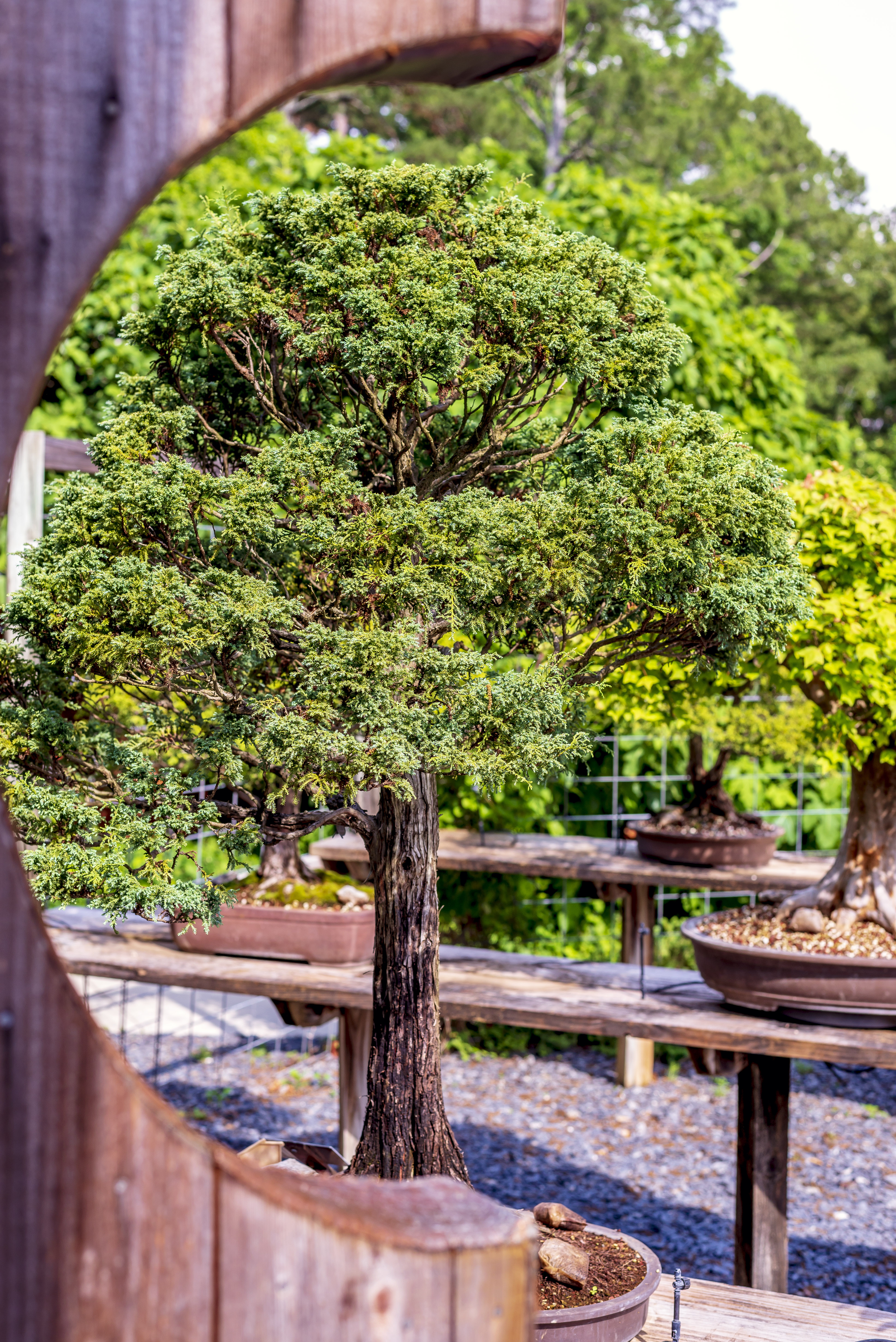 Bonsai-view-through-half-gate