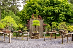Bonsai-Display-2