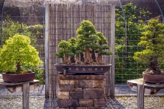 Bonsai-Display-3