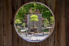 Pond-Cypress-view-through-gate