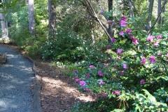 Paladino Camellia Garden