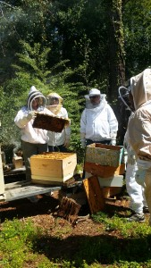 Beekeeping Registration @ Smith-Gilbert Gardens | Kennesaw | Georgia | United States