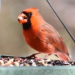 nov11-birdfeeding-300x244.jpg