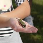 Hummingbird Banding 2013 060