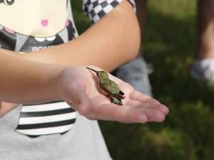 6th Annual Hummingbird Banding @ Smith-Gilbert Gardens | Kennesaw | Georgia | United States