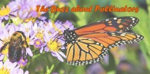 Buzz About Pollinators