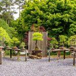 outdoor bonsai display at Smith-Gilbert Gardens