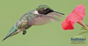 Hummingbird Banding Event @ Smith-Gilbert Gardens