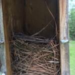 Bluebird box April 10