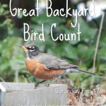 Great Backyard Bird Count 2018