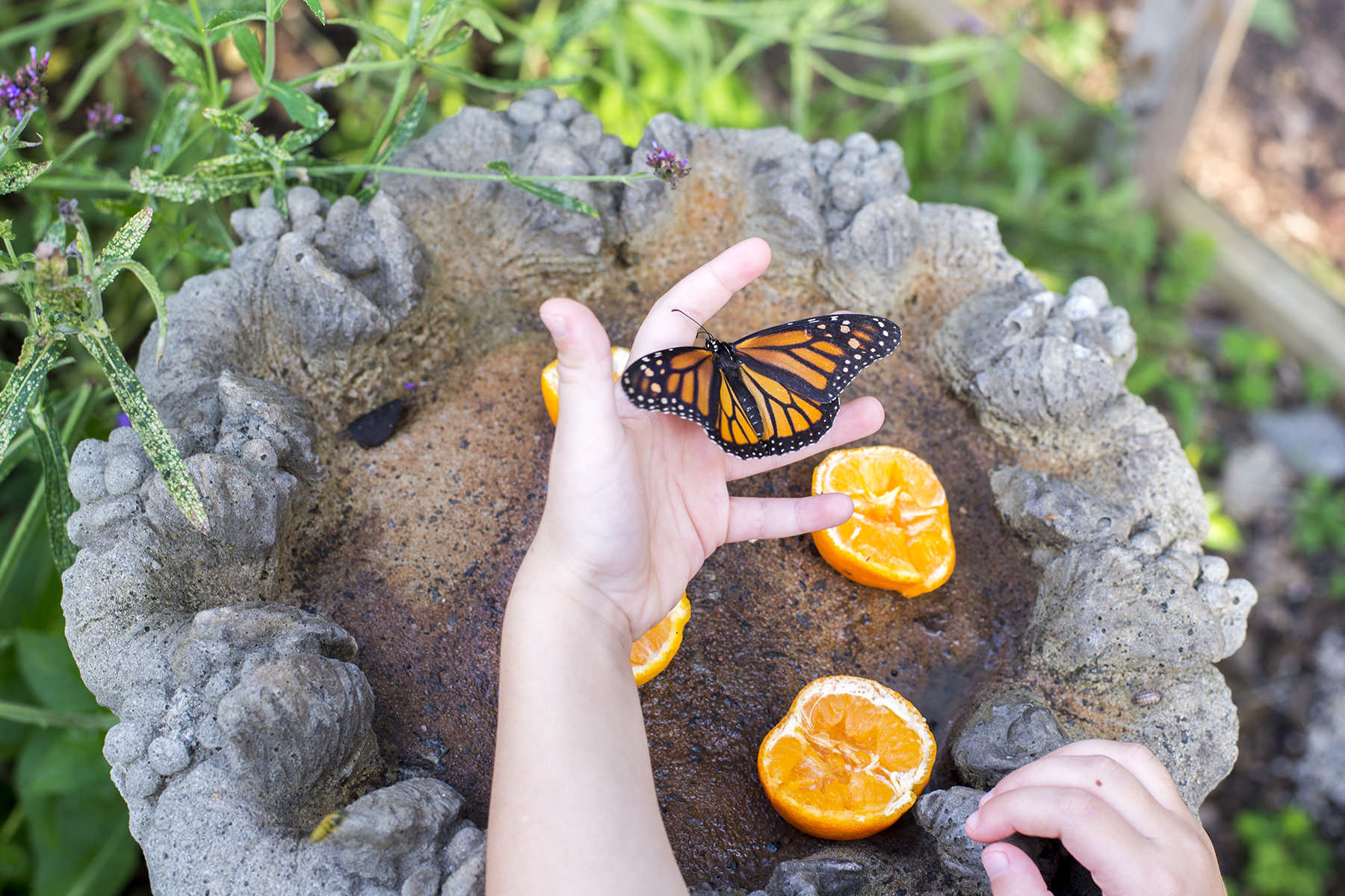 monarch in a child's hand