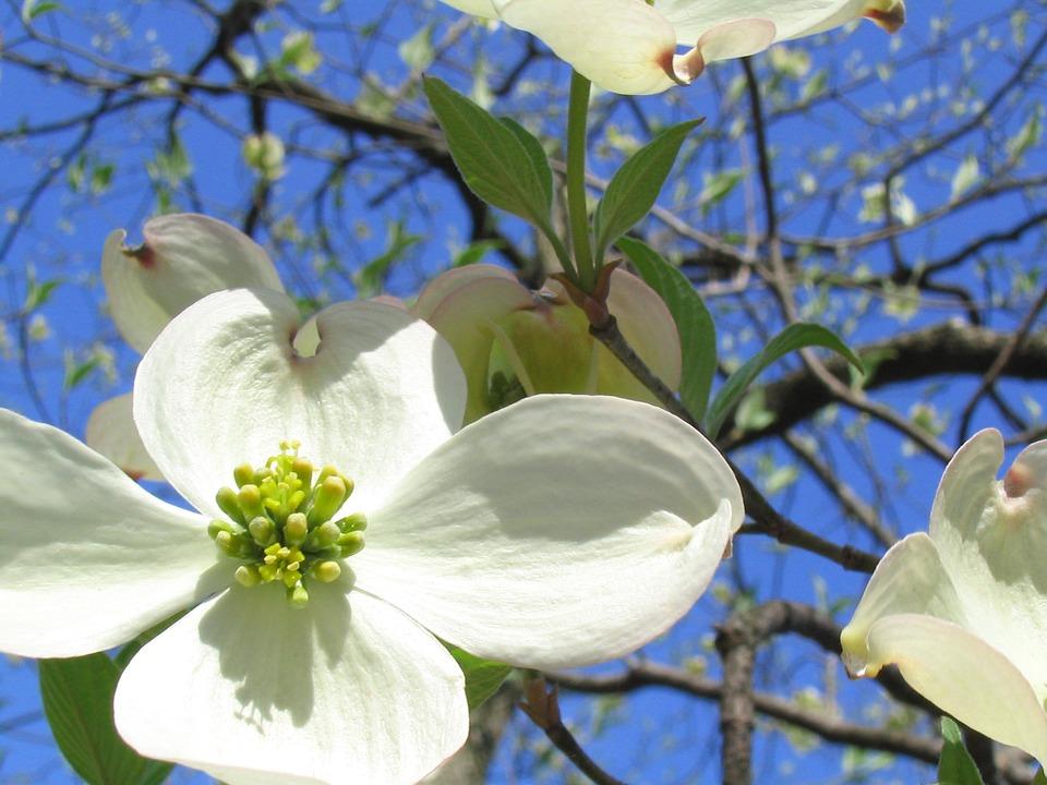 flower-670279_960_720