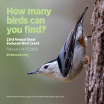 Great Backyard Bird Count flyer with Nuthatch picture