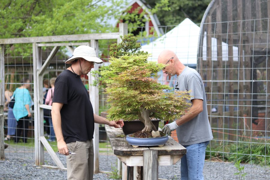 Bonsai Study Group Canceled Smith Gilbert Gardens