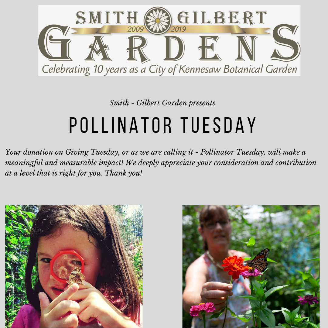 Flyer for Pollinator Tuesday